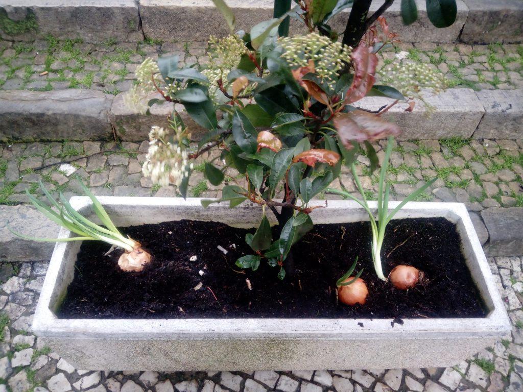Canteiro-horta